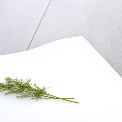 Dill by Corbis