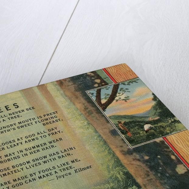 Joyce Kilmer Trees Poem, Forest by Corbis