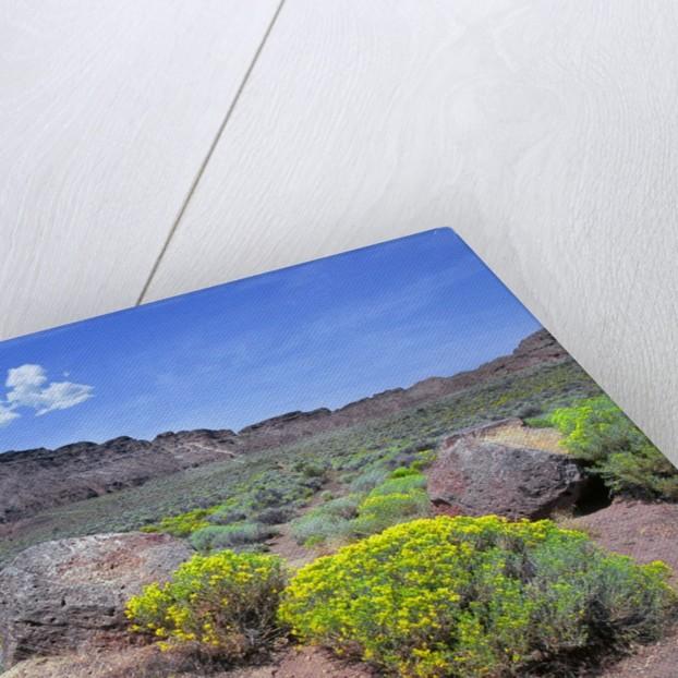 Fort Rock, Oregon by Corbis