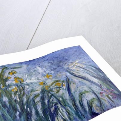 Iris by Claude Monet