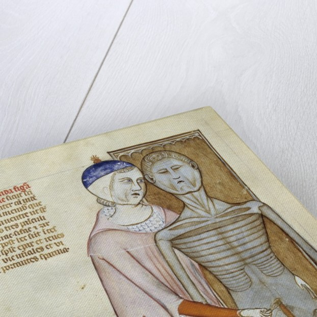 Board of anatomy and surgery depicting a dissection by Corbis