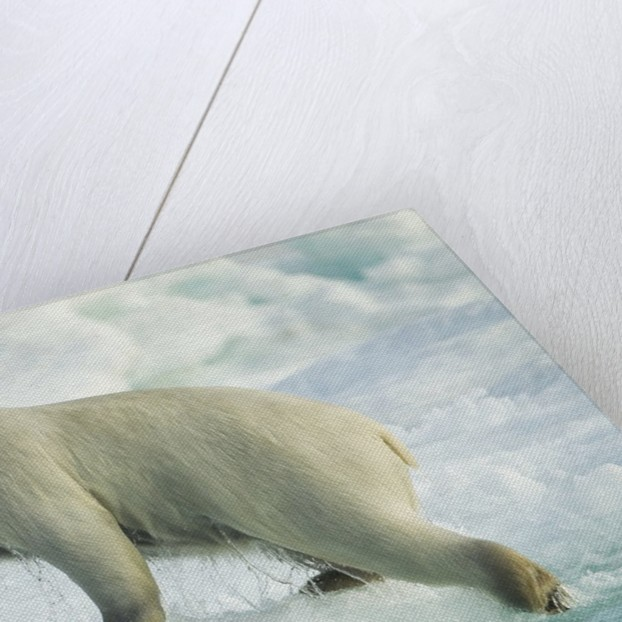 Polar Bear on Iceberg, Hudson Bay, Nunavut, Canada by Corbis