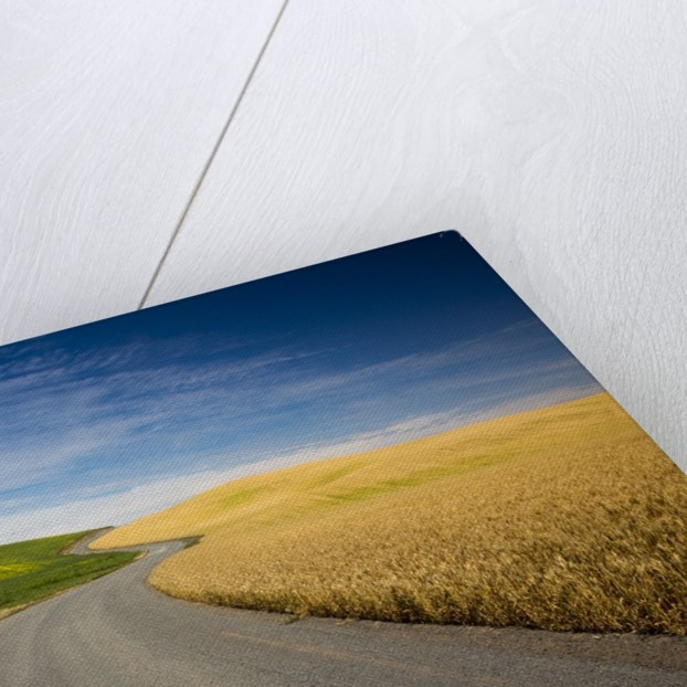 Winding Back Country Road through Winter and Spring Wheat Fields by Corbis