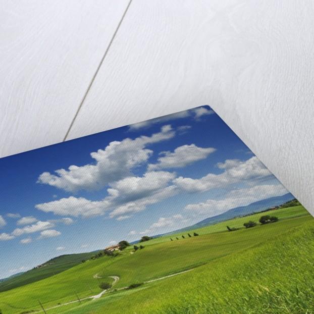 Field path and cumulonimbus clouds by Corbis