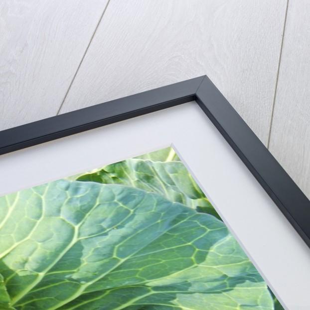 Vegetable garden by Corbis