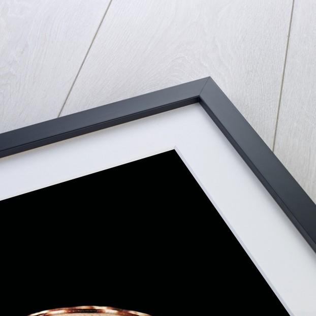 Architectonica maxima by Corbis