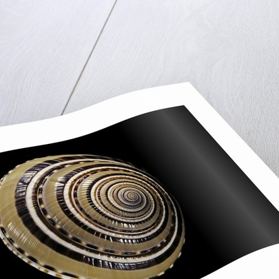 Architectonica perspectiva by Corbis