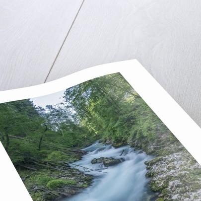 Vintgar Gorge by Corbis