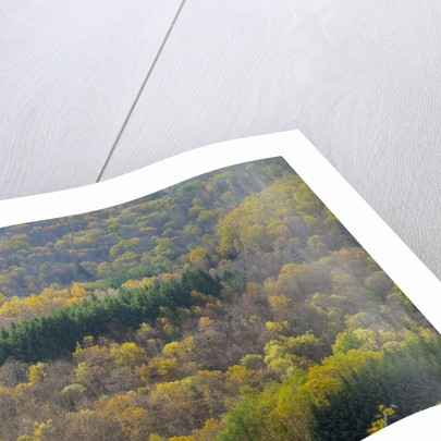 Air view of Parco delle Foreste Casentinesi by Corbis