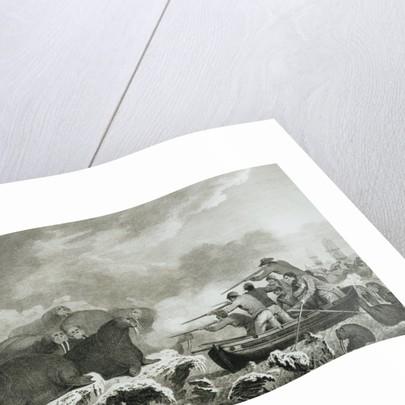 Captain Cook's Men Shooting Sea Horses by John Webber