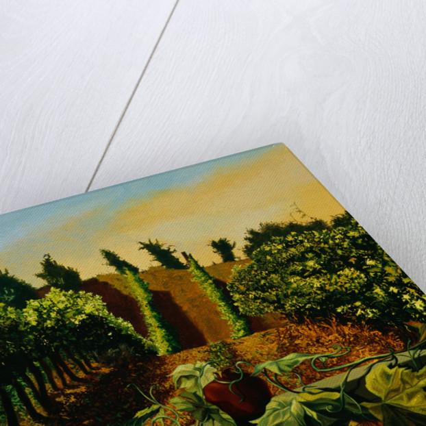 Persephone in the Vineyard by Anne Belov