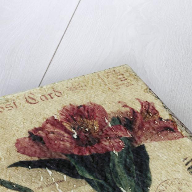 Postcard and Flower by Kim Koza