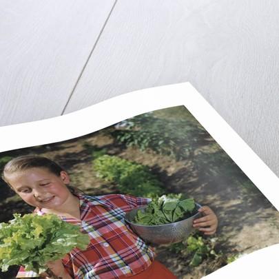 Girl Holding Head of Lettuce in Garden by Corbis