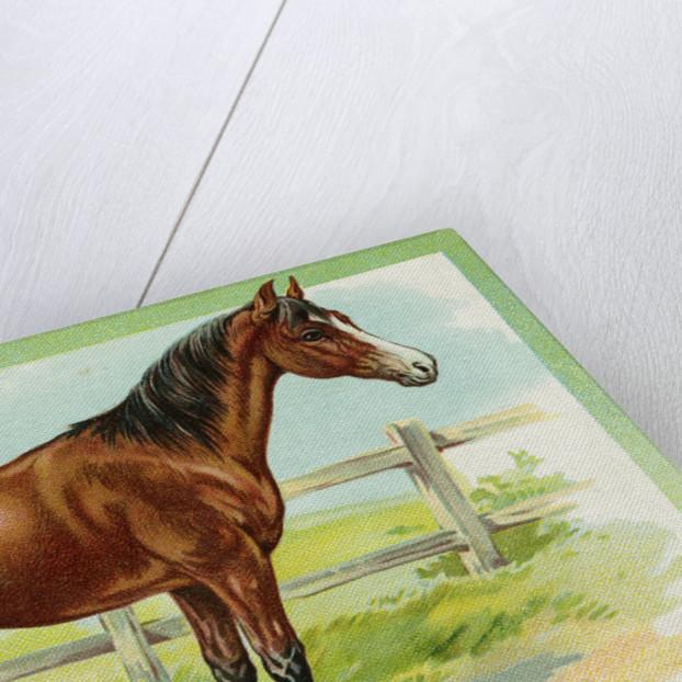 Horse Postcard by Corbis