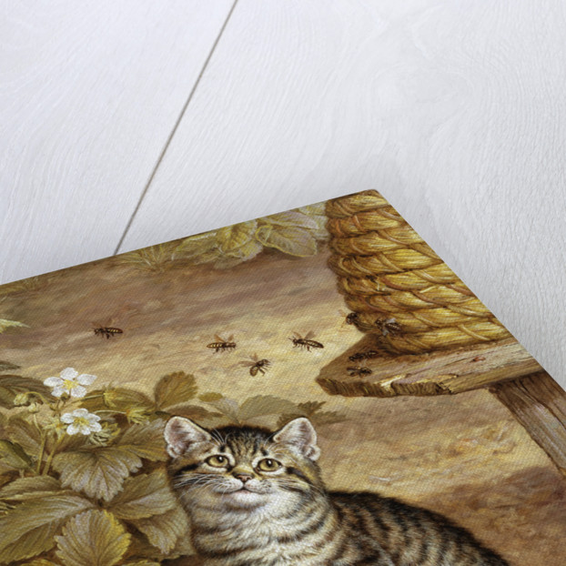 A Curious Kitten by Frank Paton