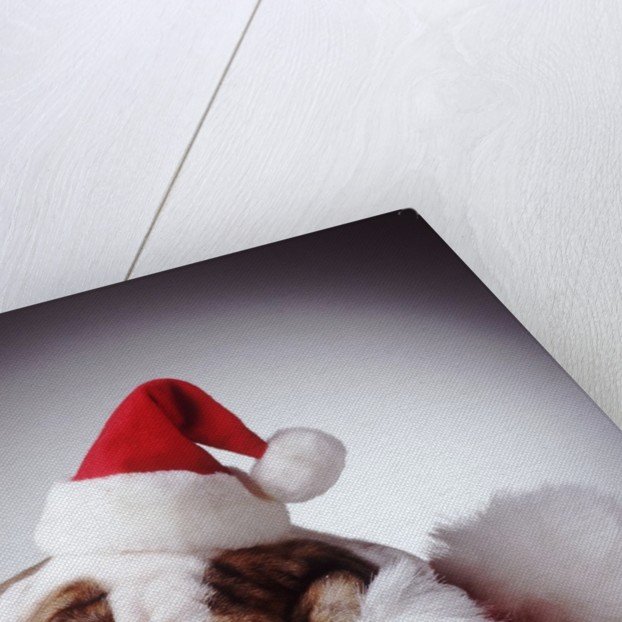 Bulldog Wearing Santa Hat by Corbis