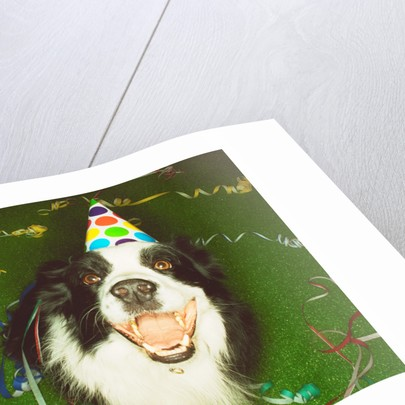 Dog Wearing Party Hat by Corbis
