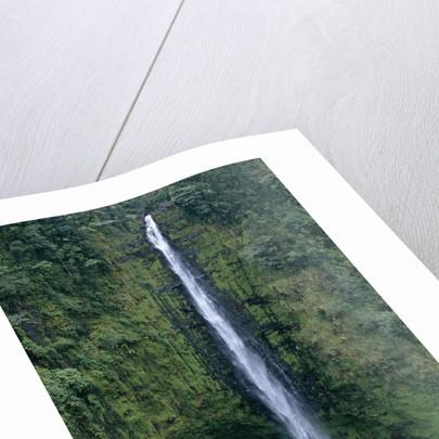 Akaka Falls by Corbis