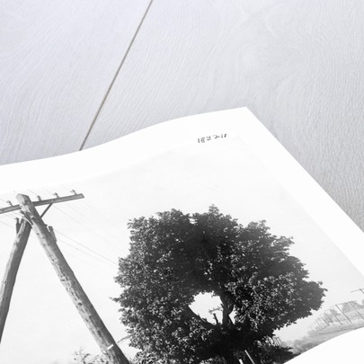Hole In Tree Allows Telephone Wires Thru by Corbis