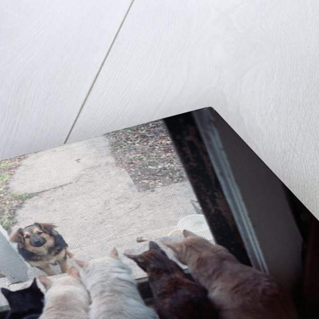 Dog Looking Through Cat-Lined Window by Corbis