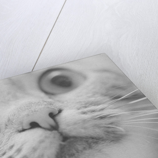 Close Up of Cat's Face by Corbis