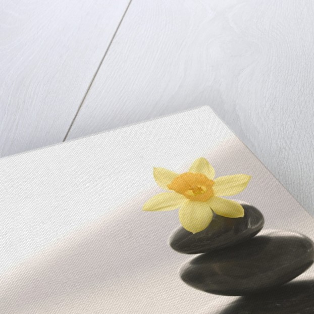 Flower Balancing on Rocks by Corbis