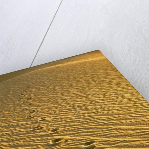 Footprints in Sand Dunes by Corbis