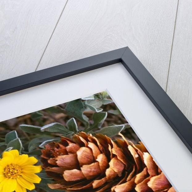 Arrangement of Flowers and Pine Cones by Corbis