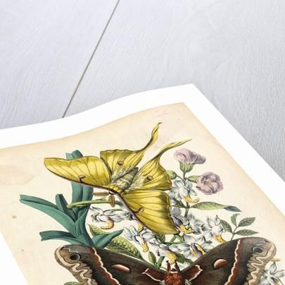 Butterflies by Corbis