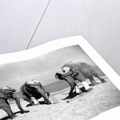Elephants Play Beach Cricket by Corbis