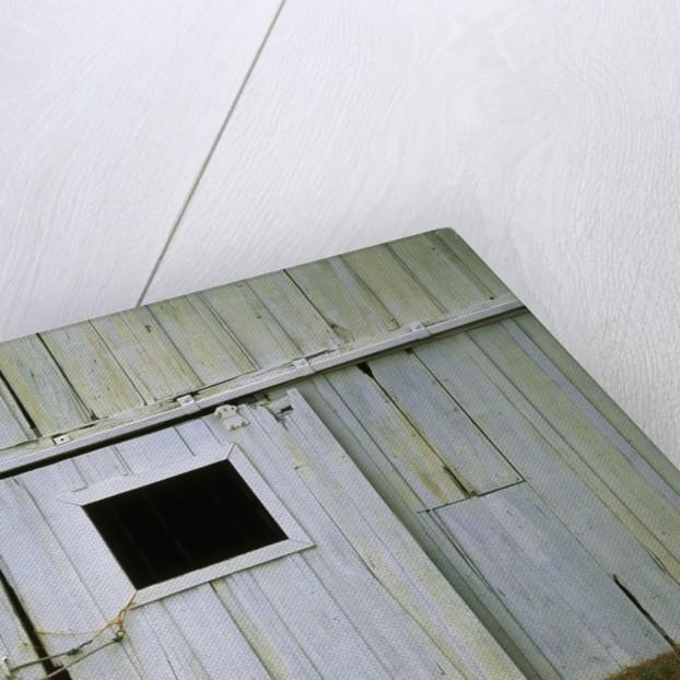 Horse Peering Through Barn Door by Corbis