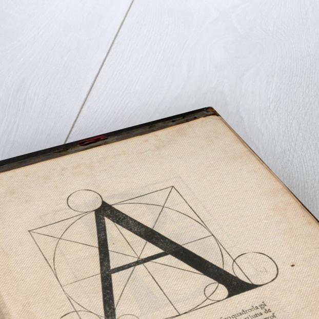 Divina proportione by Corbis