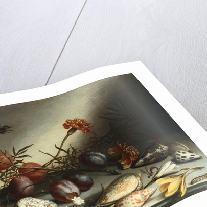 Shells, Plums, Berries, Flowers and Insects by Balthasar van der Ast