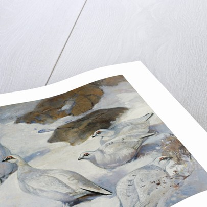 Painting of Ptarmigans by Frank Southgate