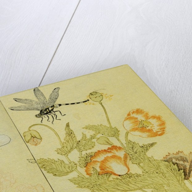 Illustration from A Picture Book of Selected Insects (Butterflies and Flowers) by Utamaro