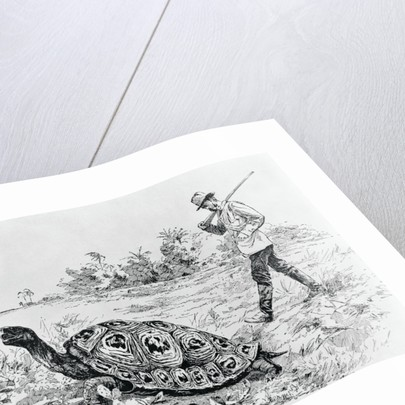 Darwin Testing the Speed of an Elephant Tortoise (Galapagos Islands) by Meredith Nugent