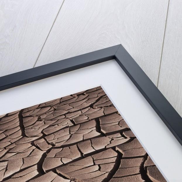 Deep Cracks in the Desert by Corbis