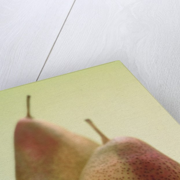 Two Pears on a Green Background by Corbis