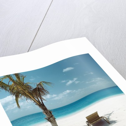 Palm Tree and Beach Chair by Corbis