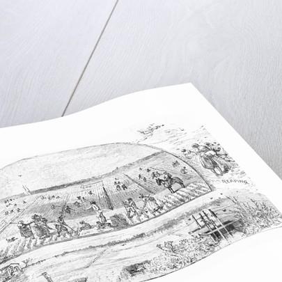 Farmers Tending Rice Fields by Corbis