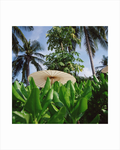 Tropical Plants and Traditional Parasols by Corbis