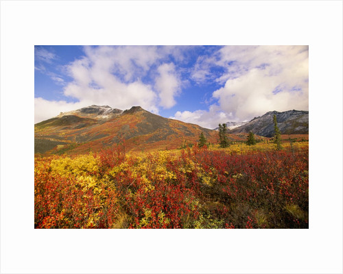 Tundra and Ogilvie Mountains in Fall Colors by Corbis