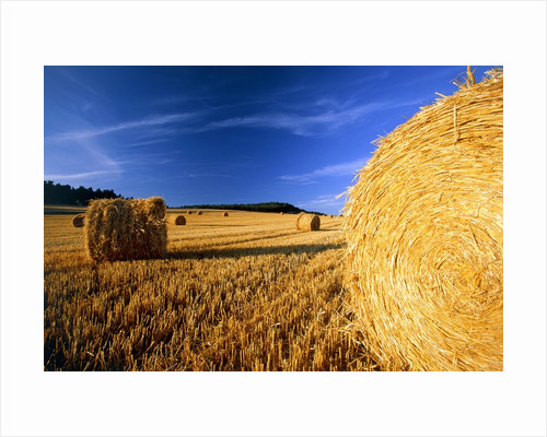 Field with bales of hay by Corbis
