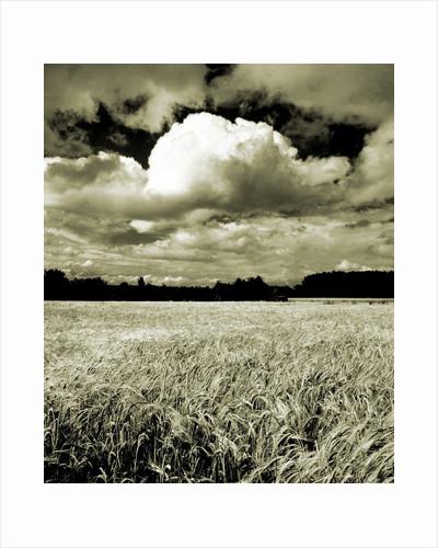 Field Under Cloudy Sky by Corbis