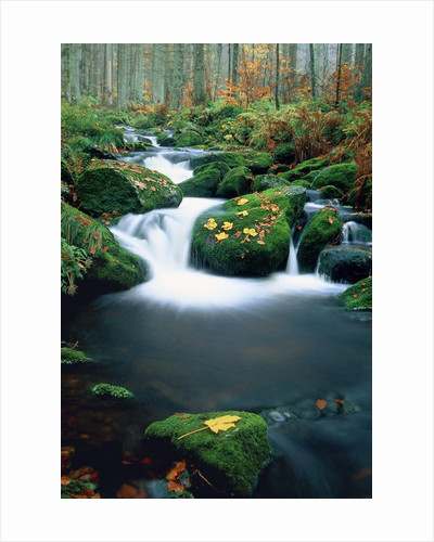 Stream with leaves on mossed stones, Bavarian forest by Corbis