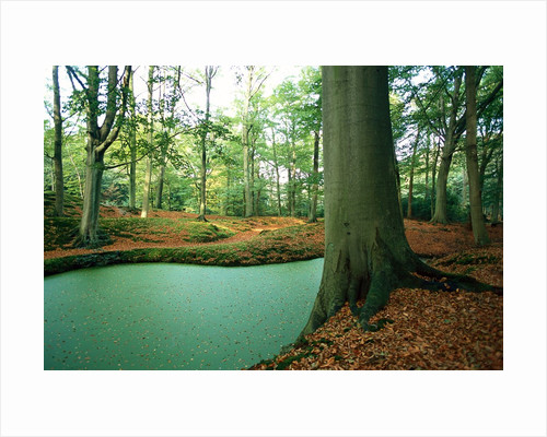 Lake in a wood by Corbis