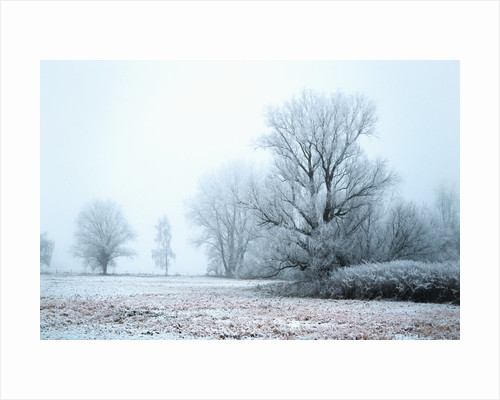 A meadow in winter by Corbis