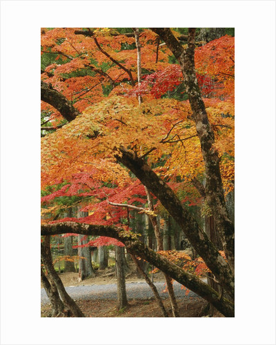 Autumn in Koya-san by Corbis