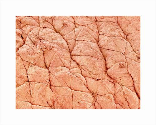 Human Skin by Corbis