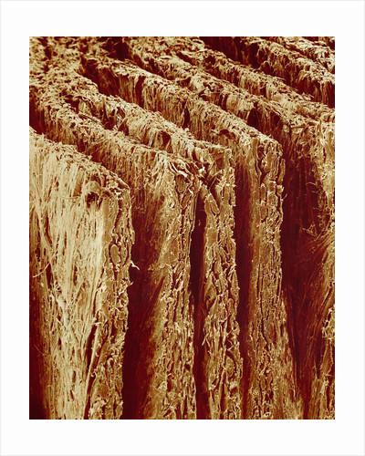 Edges of Book Pages by Corbis